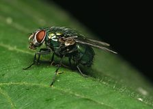 Fly on the leaf. Sharp and clean stock photography