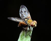 Fly on a leaf royalty free stock images
