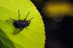 Fly on leaf stock image