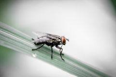 Fly on leaf. Blur and soft focus of Fly on leaf with green color background Stock Photos