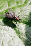 Fly On Leaf Royalty Free Stock Photography
