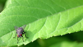 Fly on the leaf Stock Photography