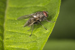 Fly on leaf Stock Photos