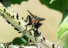 Fly. On leaf of macro shot Royalty Free Stock Image