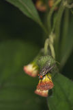 Fly on the leaf. In summer Royalty Free Stock Image