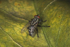 Fly on the leaf. In summer Stock Photography