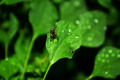 Fly on the leave Royalty Free Stock Image