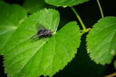 Fly on the leaves in the forest stock image
