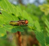 Fly on the leaves. royalty free stock images