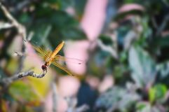 Fly like dragonfly stock image