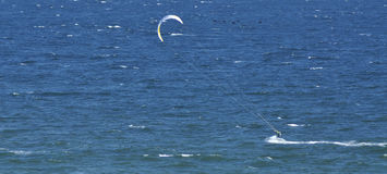 Fly like a kite. At the sea: a kite surfer with some flying birds Stock Photography