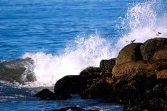 Fly Like the Wind. Waves breaking on Jetty Royalty Free Stock Photography