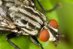 Fly macro. On a green leaf royalty free stock photo