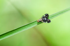 Fly macro in green nature Stock Photography