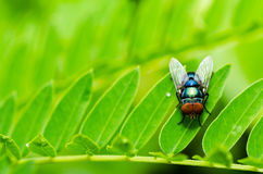 Fly macro in green nature Royalty Free Stock Images
