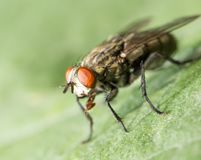 Fly. macro. In the park in nature Royalty Free Stock Photos