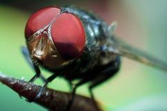 Fly, macro shot. Macro shot of a fly stock photography