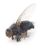 Fly Stock Photography