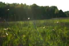 Fly mayfly Stock Photos
