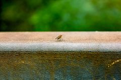 Fly on metal. Fly on a metal rail in the outdoors Royalty Free Stock Photography