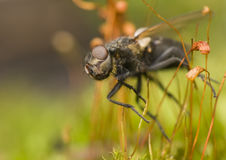 Fly and moss Royalty Free Stock Photo
