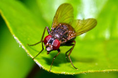The fly. In my garden Stock Photo