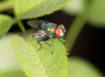 Fly in nature. close-up. In the park in nature Royalty Free Stock Image