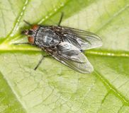 Fly in nature. close-up. In the park in nature Royalty Free Stock Photos