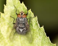 Fly in nature. close-up. In the park in nature Stock Images