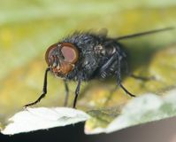Fly in nature. close-up. In the park in nature Stock Photos