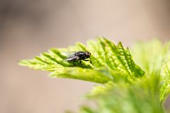 Fly in nature. macro. In the park in nature royalty free stock image