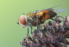 Fly in nature on old plant Stock Images