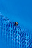 Fly on a net Stock Images