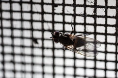Fly net macro Royalty Free Stock Photo