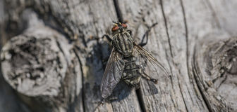 Free Fly On Old Tree In Summer Day Royalty Free Stock Image - 95870106