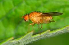 Fly outdoor on plant Stock Image