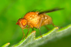Fly outdoor on plant Royalty Free Stock Photo