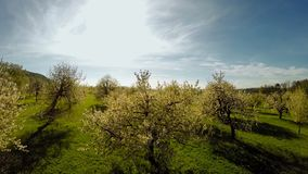 Fly over spring trees plants nature background summertime aerial view stock video