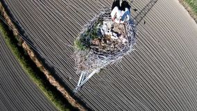 Fly over a stork nest with chicks and one of the stock footage