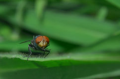 The fly is perching on the green leaf. The fly is resting Stock Photography