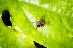 Fly. This is a photo of a fly, was taken in XiaMen botanical garden, China Stock Photo