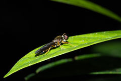 Fly. This is a photo of a fly, was taken in XiaMen botanical garden, China Stock Photos