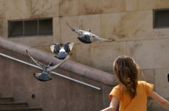 Fly with pigeons Stock Images