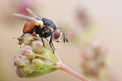 Fly on a plant in nature Stock Photography