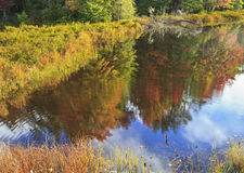 Fly Pond Autumn Reflections Stock Image
