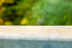 Fly in forest. Fly in on a rail in the forest Royalty Free Stock Photo
