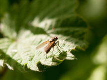 A fly resting at the edge of a leaf outside in spring meadow in royalty free stock photos