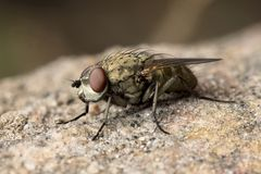Fly on a rock Royalty Free Stock Image