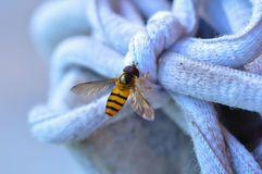 Fly on rope Stock Photos