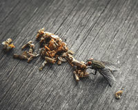Fly and rotten food Royalty Free Stock Photos